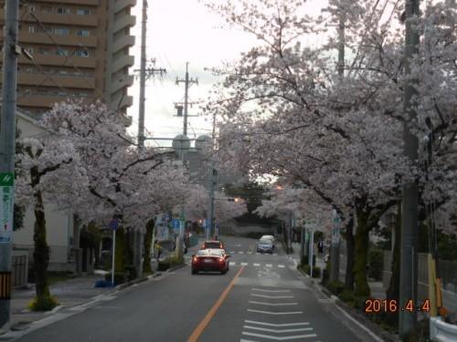山崎川へのお花見の前後には是非お立ち寄りくださいませ♪