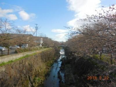 瑞穂区の桜情報③