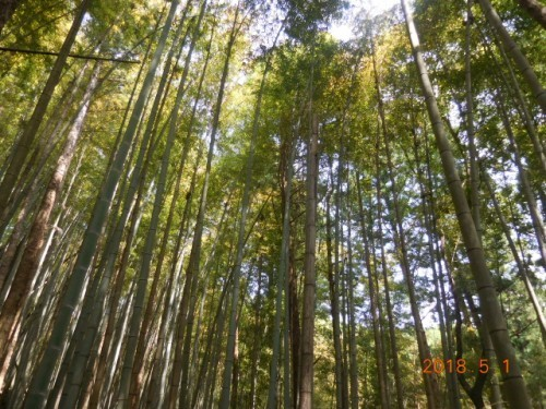 !!タケノコ掘り初体験!!⑥
